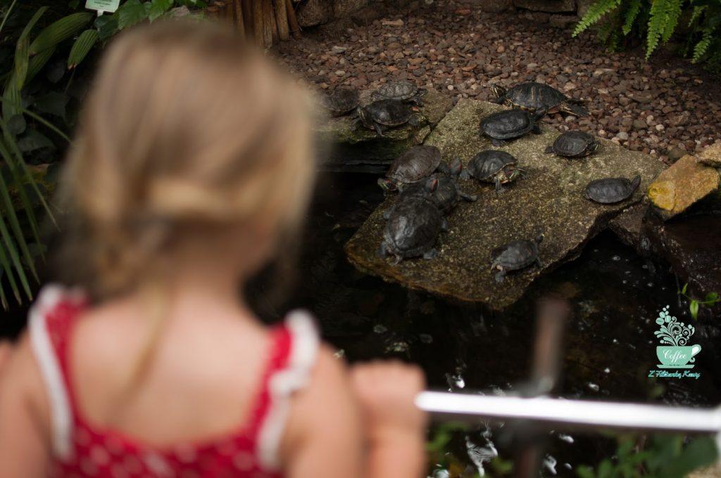żółwie palmiarnia
