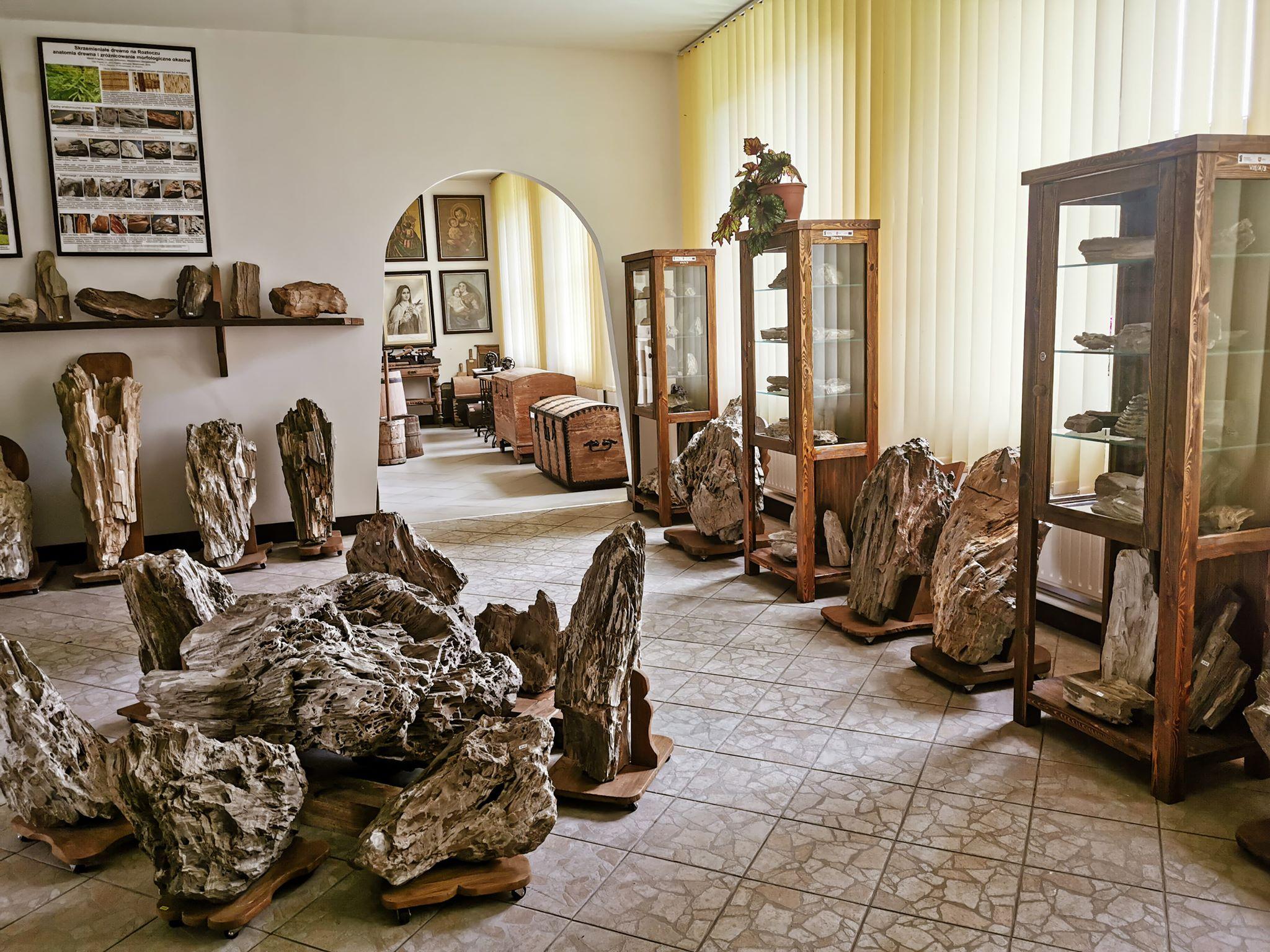 Muzeum Skamieniałych Drzew