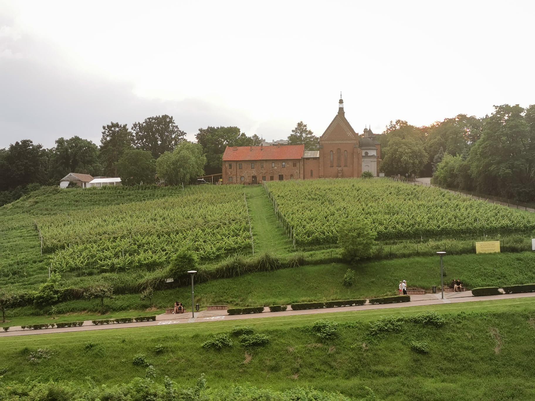 winnice Sandomierz
